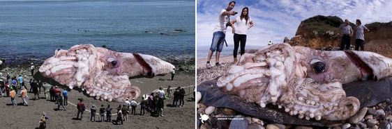 A hoax about a giant squid that washed to shore has been exposed